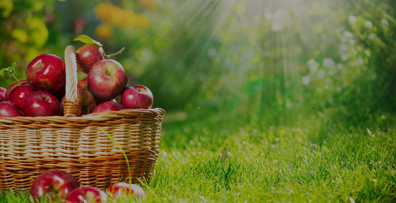 Frutas Berta